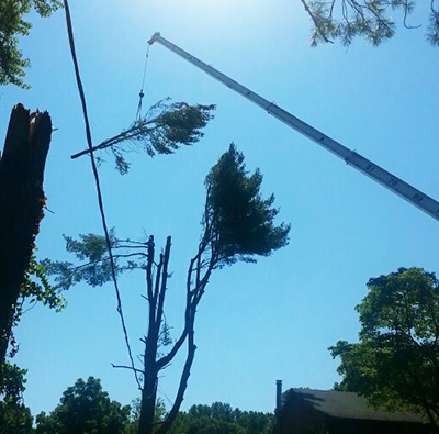 Montgomery County MD Tree Removal