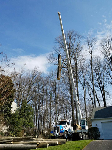 OHW Tree Work Ellicott City MD
