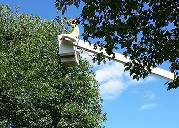 Tree Maintenance Trimming MD