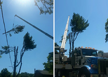 Tree Removal Trimming Service MD